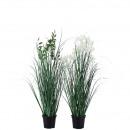 Gras blühend, getopft, 2 Motive, H52cm, TO9,5, grü